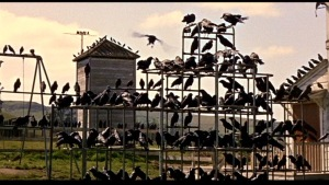 birds_bars